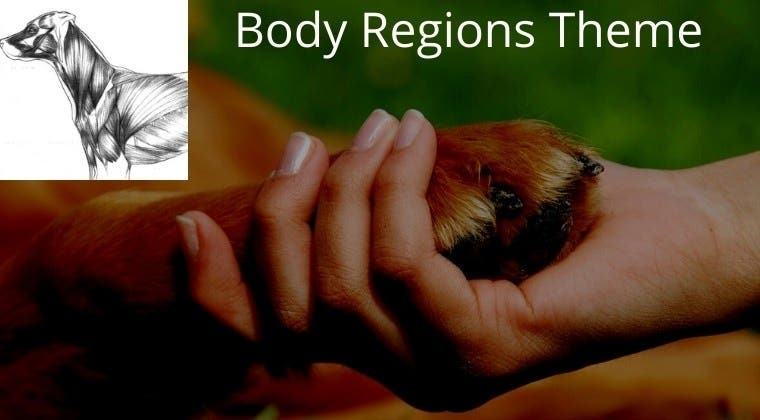 InTouch with Dogs: Full Body Regions Archives