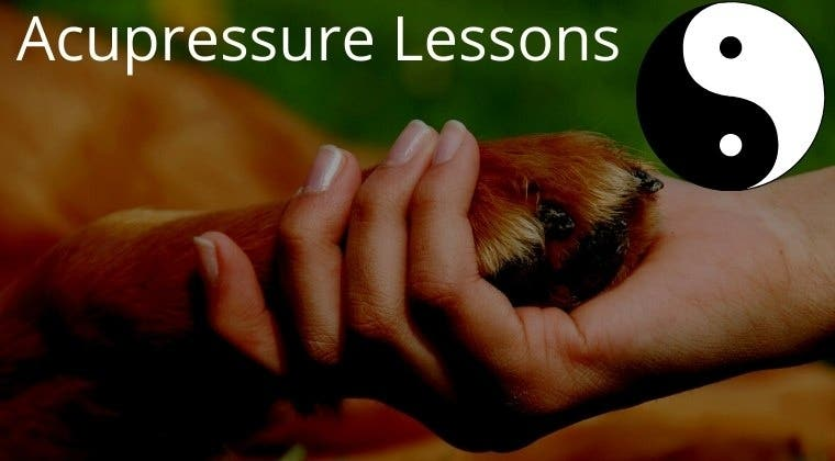 InTouch with Dogs: Acupressure Lessons By Season