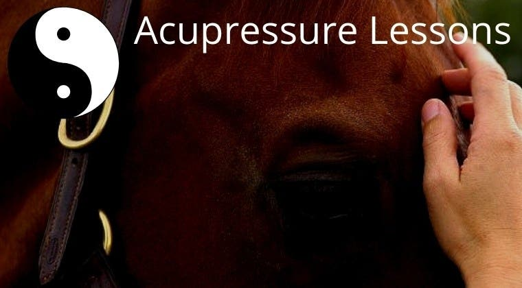 InTouch with Horses: Acupressure Lessons By Season