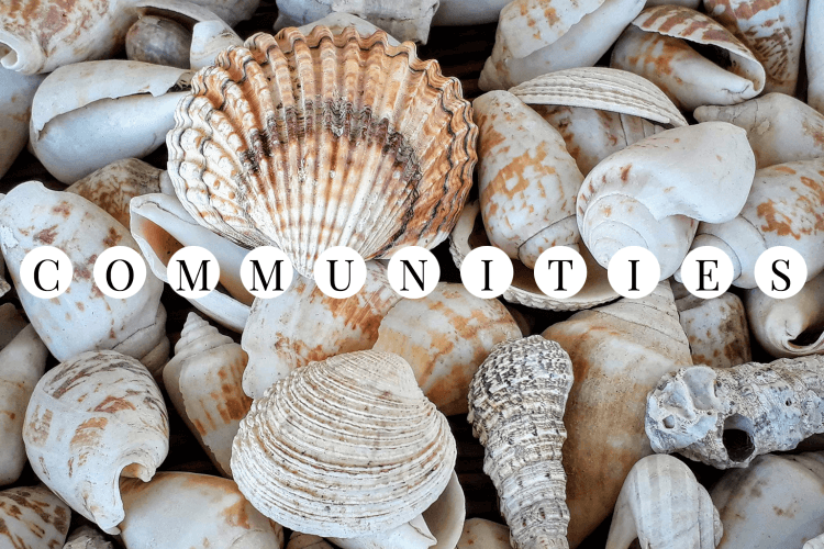 Image of seashells in shades of white, grey, and orange with the word COMMUNITY.