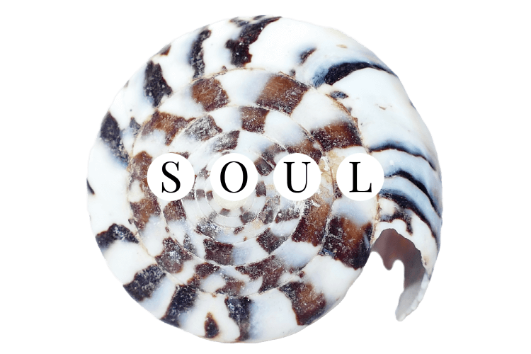 Image of seashell in a white, black. and brown spiral with the word SOUL.