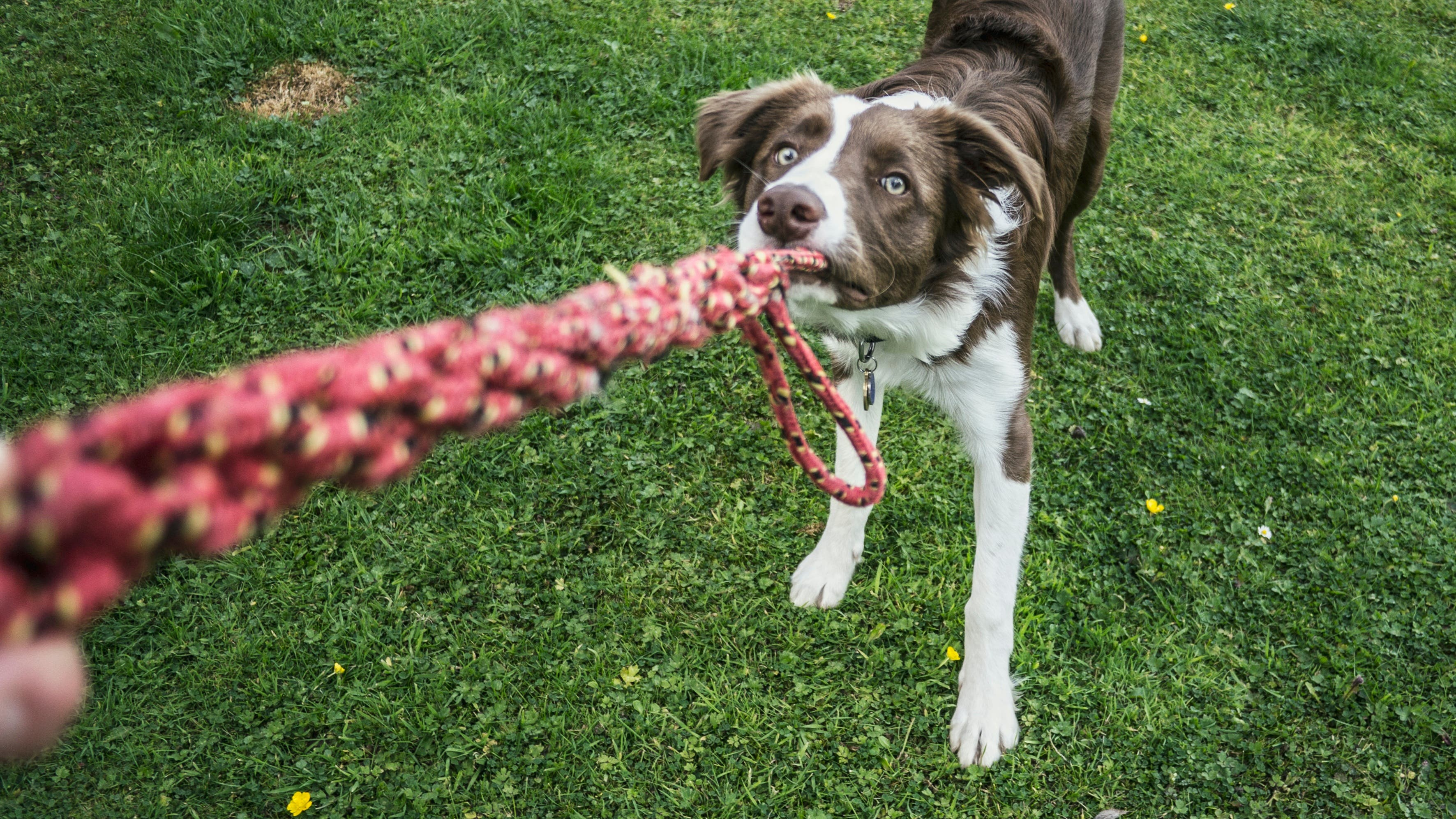 Dog training mastery - silver