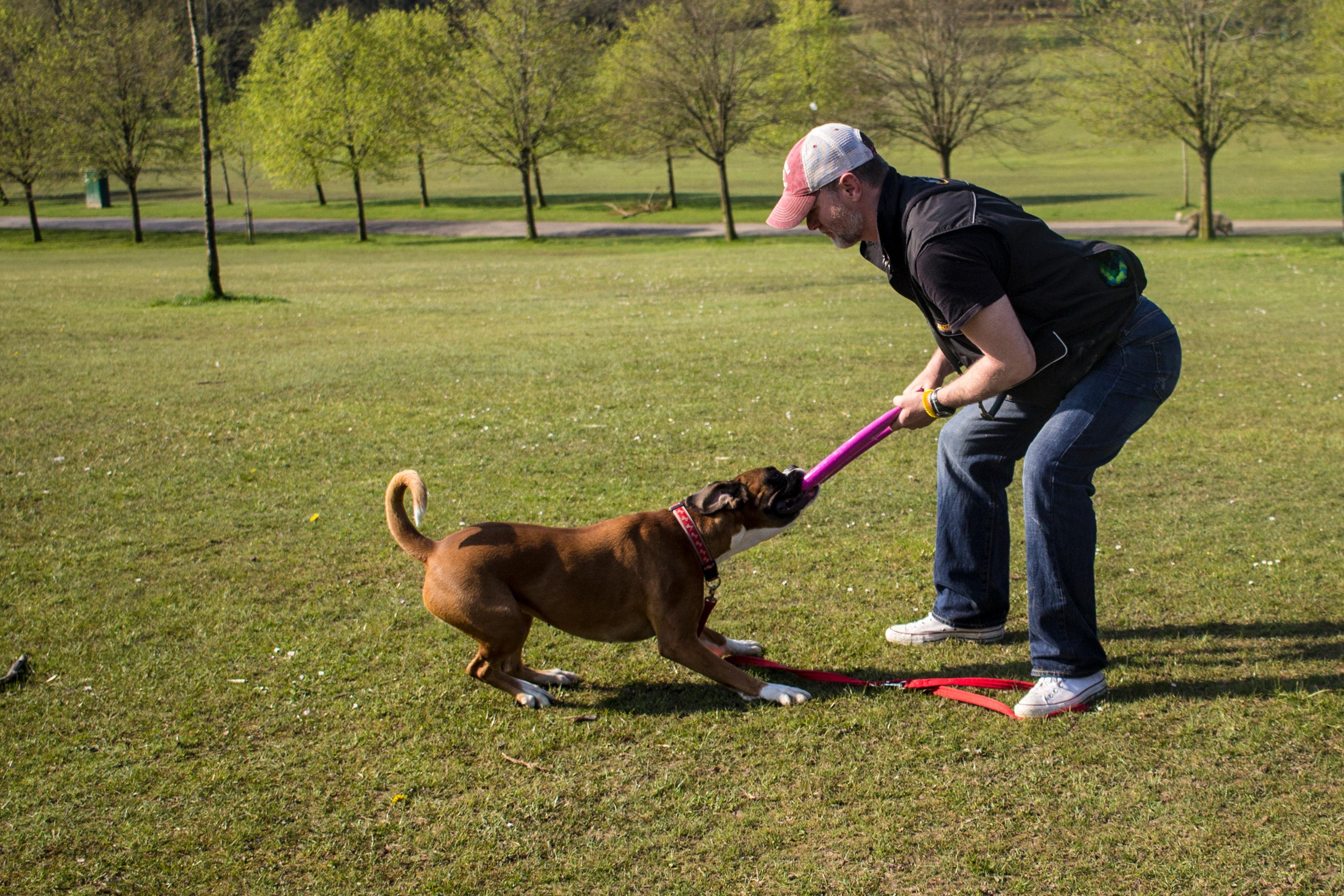 Dog training mastery - Platinum